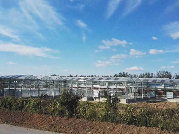承德草莓大棚(peng)及順義果園日(ri)光溫室
